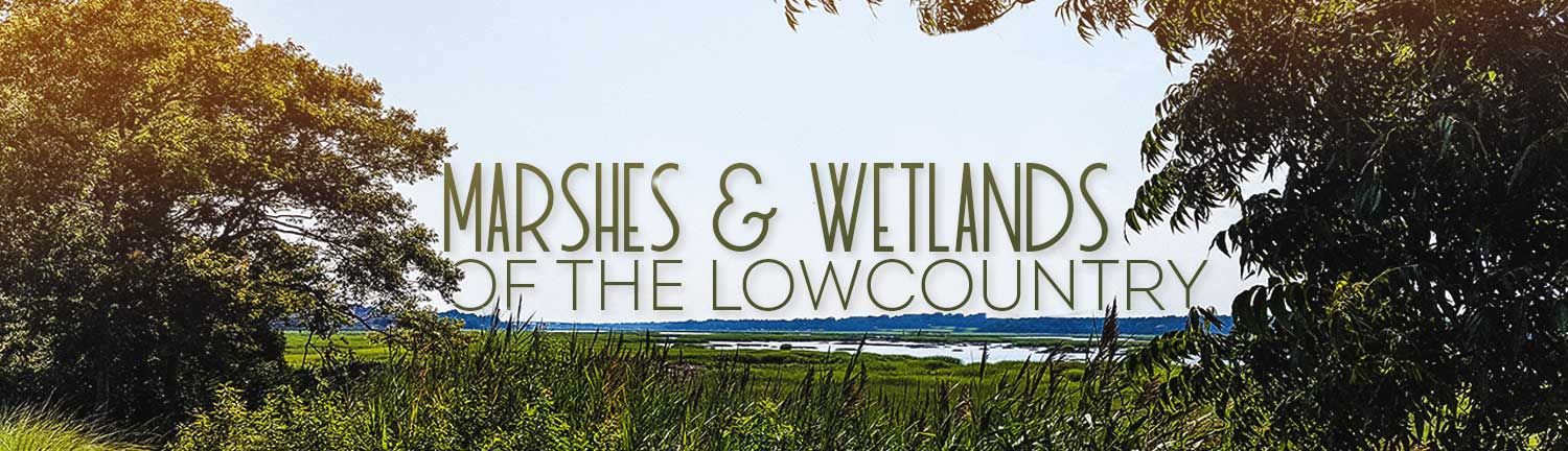 Marshes & Wetlands of The Lowcountry