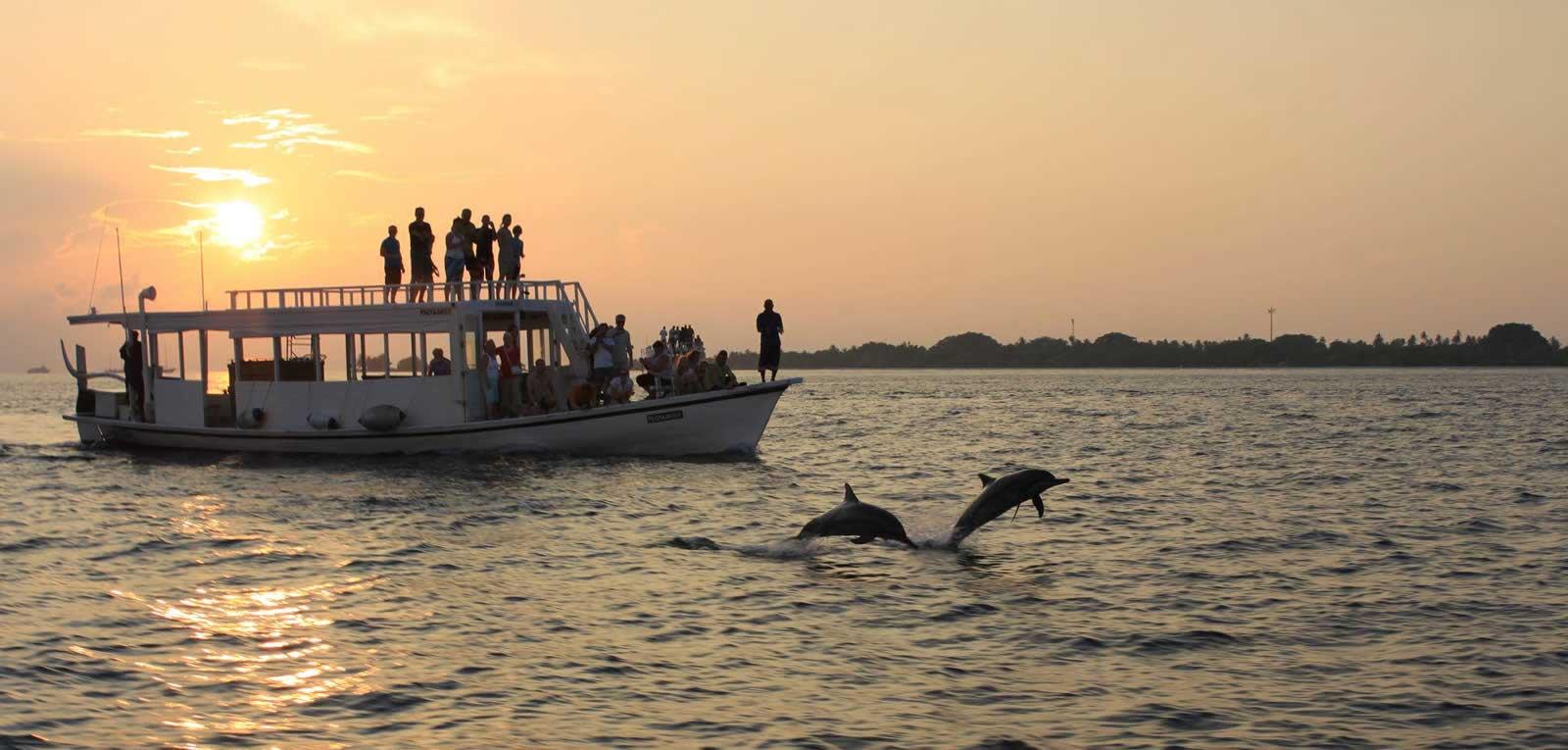 sunset-dolphin-cruise
